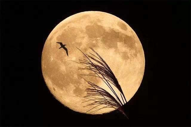 月亮1 (1).jpeg