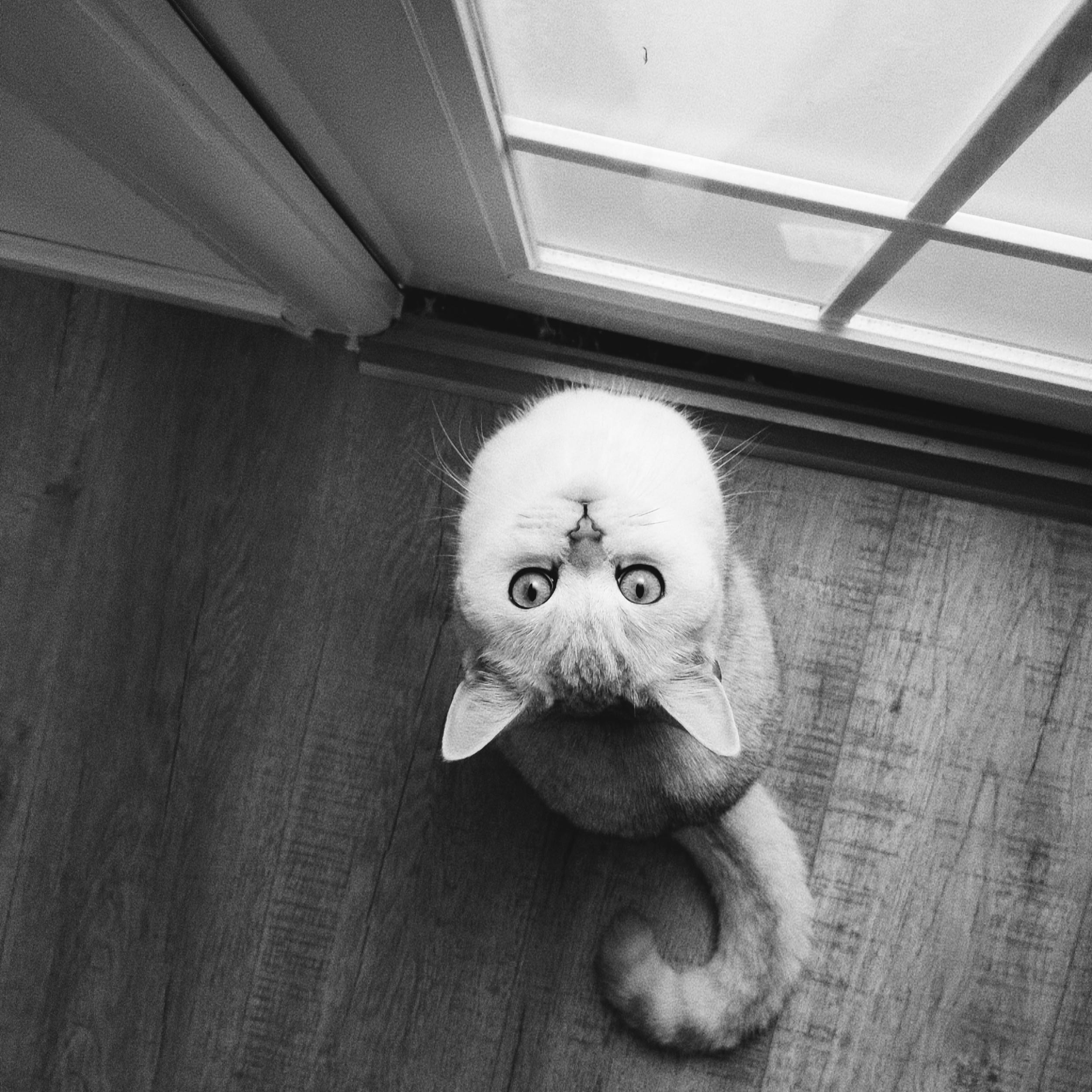 浴室外的守候 #猫爪子