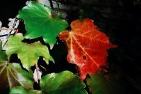 #我用 VSCO 修图# 大自然的色彩