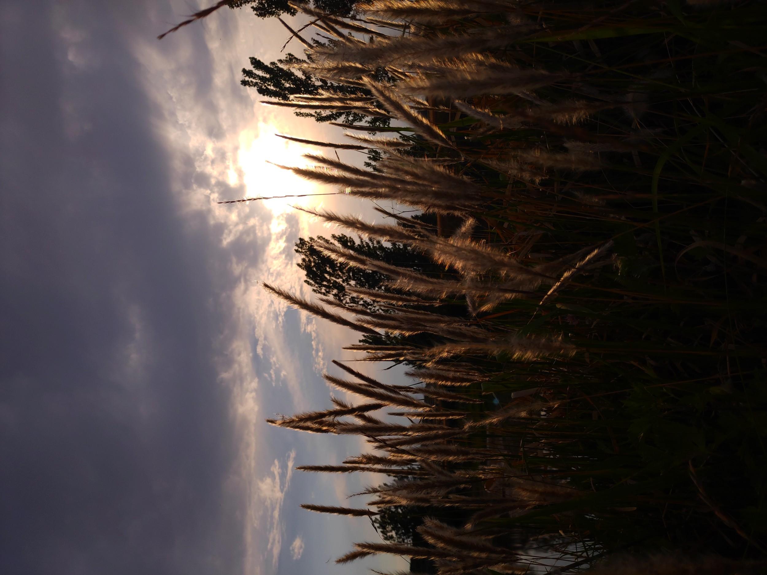 农村的风光