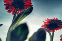逆光拍的几张花草