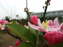 觅春---春日的一个下午