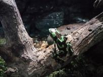这只蛙会有毒吗?