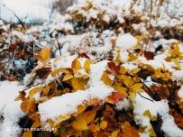 雪后+自带滤镜