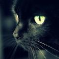 夜念猫猫云