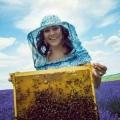 养千年蜜蜂医疗