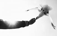 T1 海鸥 黑白