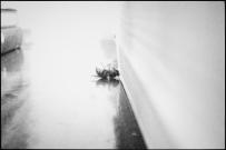 一只蜜蜂死在了我的屋子里