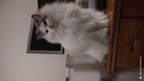 猫(= ̄ω ̄=)